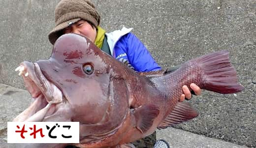 釣れば釣るほど抜け出せない「魚釣り」という底なし沼