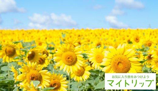 【最新版】全国ひまわり畑の名所!一面が黄色に染まる夏の絶景