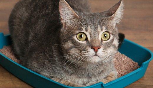 掃除が楽になる!おすすめの猫砂 システムトイレ編