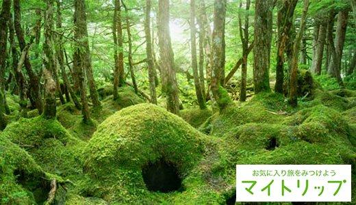 全国の美しい苔スポット21選!苔寺や渓流の大自然など