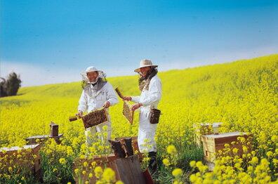 武州養蜂園 イメージ02