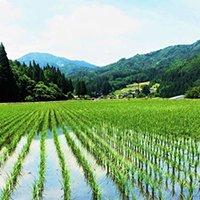 全国トップブランドへ急成長中の『飛騨の米』