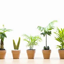 観葉植物・ガーデニング
