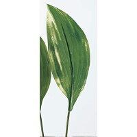 アスカ/ホスタリーフ ギボウシ クリームグリーン/A-41040-53A 造花 グリーン その他のグリーン