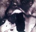 パープルムカデ/My Song/CD/UKDZ-0108