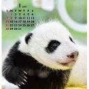 プライス2018年卓上カレンダー ベビーパンダOK カレンダー