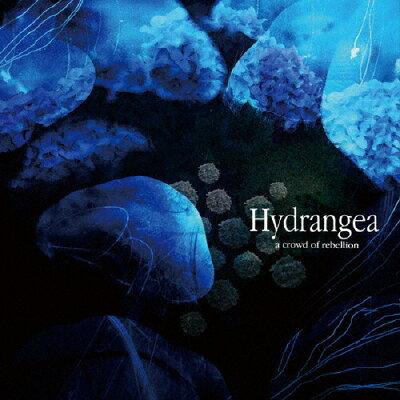 Hydrangea/CD/ACOR-1001