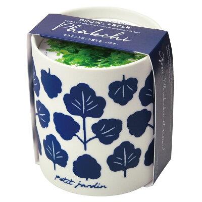 グロー&フレッシュ パクチー 観葉植物 ガーデニング 聖新陶芸