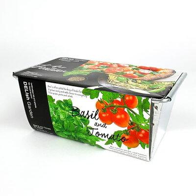 観葉植物 ガーデニング デリッシュガーデンダブル イタリアン /バジルミニトマト
