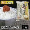 魚沼米穀 魚沼産こしいぶき一等米 平成23年産 10kg 5kg×2