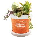 暮らし良い品 植木鉢 ラウンドバンドポット M オレンジ 13*13*11cm(1コ入)