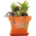 暮らし良い品 植木鉢 スクエアバンドポット M オレンジ 13*13*11cm(1コ入)