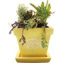 暮らし良い品 植木鉢 スクエアバンドポット M イエロー 13*13*11cm(1コ入)