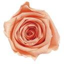 フロールエバー/プレミアムローズ 6輪 シャーベットオレンジ/FL090-16 プリザーブドフラワー 花材 ローズ フロールエバー プレミアムローズ 約7.5~10cm