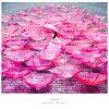 Ref:rain(仮)/CDシングル(12cm)/SECL-2254