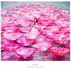 Ref:rain(初回生産限定盤)(仮)/CDシングル(12cm)/SECL-2252