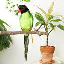 """アーティフィシャル・バード """"Green Parrot"""""""