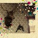 フロム・メランコリー・ガーデン/CD/NBCD-005