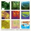 スリー・アマゾニアン・エッセイズ/CD/EM-1165CD