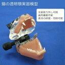 猫の透明顎実習模型 1054825