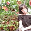 桃栗/CDシングル(12cm)/ONPU-0003