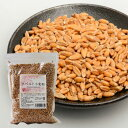 プレマシャンティ r スペルト小麦粒