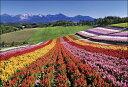 写真工房 ケイトウ咲く四季彩の丘