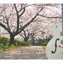 キミがパラダイス/CDシングル(12cm)/CC-1404