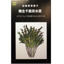 伝統野菜の種 晩生千筋京水菜5ml約1500粒