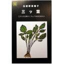 大袋 伝統野菜の種 三ツ葉 みつば 50ml