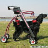 R.beeva 大型犬用 リハビリ用歩行補助具 ドッグウォーカー