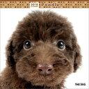 2018年度版 THE DOG カレンダー プードル