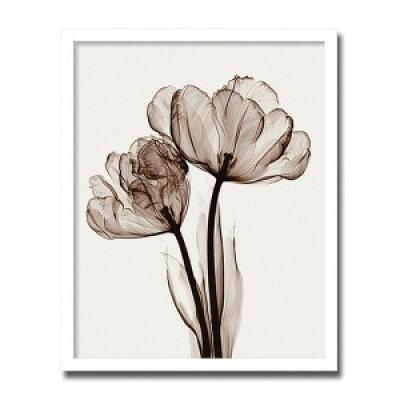 インテリアアート X-ray Photograph Steven N Meyers(スティーブンNマイヤーズ) Parrot Tulips II AS-10550