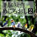 野鳥のさえずり: めじろおし: 2