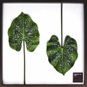 株式会社伸和 F-style リーフパネル・Elephant ear Leaf エレファント イア リーフ 525x525x30mm