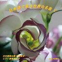 日本語で歌う世界の名曲V/CD/NAK-120317