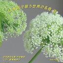 日本語で歌う世界の名曲 VIII/CD/NAK-150315