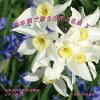 日本語で歌う世界の名曲 X/CD/NAK-170313