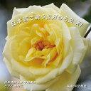 日本語で歌う世界の名曲 XI/CD/NAK-180311