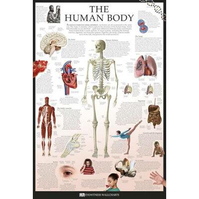 ポスター The Human Body - Dorling(人間の体)《PPS-101》
