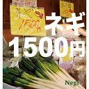 ネギ1500円/CD/TECD-1016