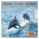 海外 輸入版 カレンダー 2021年 壁掛け ドルフィン イルカ Dolphins artwork STUDIOS 写真 動物 インテリア 令和3年 暦