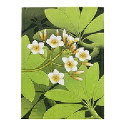 プルメリアの花が描かれた色鮮やかなアート(61250)