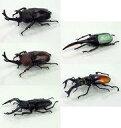 エフトイズ 昆虫ハンター