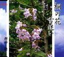 桐の花/CDシングル(12cm)/AFMD-1080