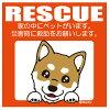 Leaps RESCUE柴犬YL 1枚