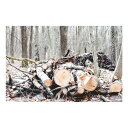 特大ウォールステッカー MU3アクセント壁紙 冬の森林 ph2043