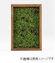 arne パネル Botanical s15