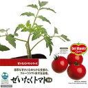 【デルモンテ】ぜいたくトマト(大玉) 3号(1ポット)