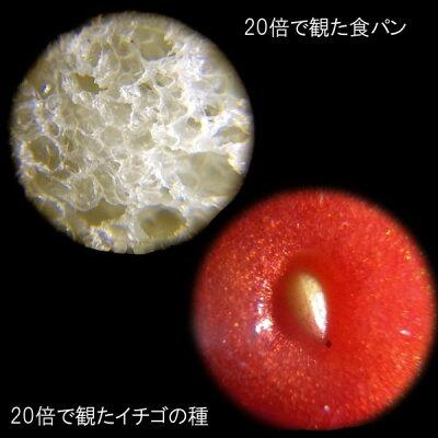 顕微鏡 ハンディ petit 20倍 ブルー RXT150A(1個)